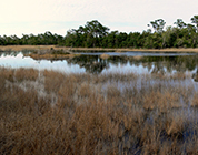 Spruce Bluff Preserve, Port St. Lucie